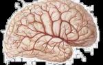 Глиза в головном мозге в белых веществах (единичные) на мрт: что это такое?