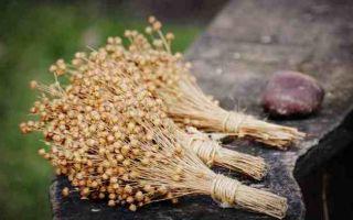 Семена льна — как принимать для очистки организма и польза