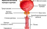 Кровь из члена и причины патологии