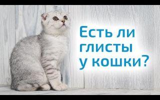 Как гнать глистов у кошек?