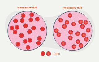 Повышенные гематокритные показатели: это означает, что у взрослых есть причины и симптомы, а что такое полицитемия