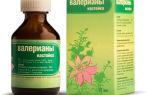 Валериана (валерьяна): лечебные свойства и побочные эффекты
