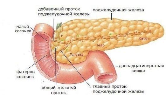 Диффузные изменения паренхимы поджелудочной железы - симптомы и лечение