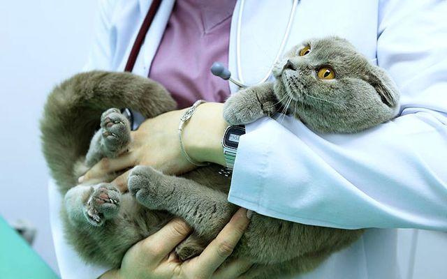 Мочекаменная болезнь у кота симптомы и лечение, причины, препараты, корм, профилактика
