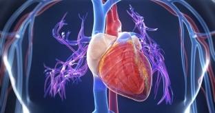 Артериальная гипотензия: как жить с пониженным давлением