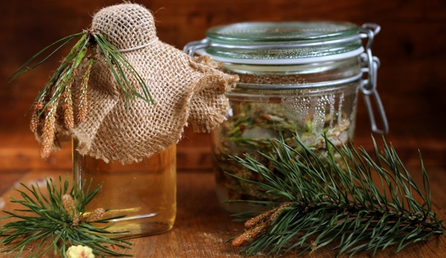 Настойка из сосновых шишек на водке: лечебные свойства, применение, противопоказания, от каких болезней помогает