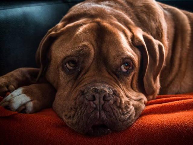 Депрессия у собак: причины, симптомы, лечение