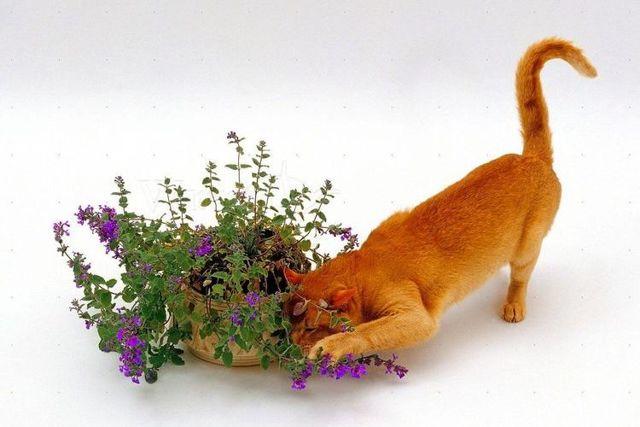 Стоп-Стресс для кошек и собак — инструкция по применению