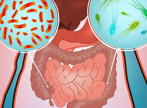 Кишечная инфекция - симптомы и лечение у взрослых: что принимать из препаратов