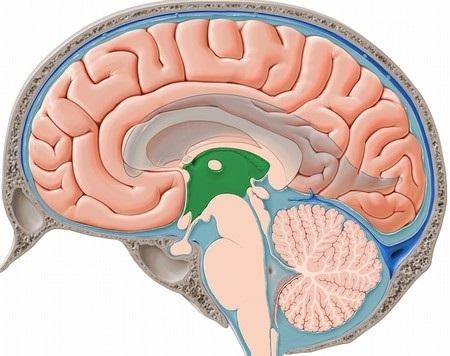 Желудочки головного мозга: строение желудочковой системы