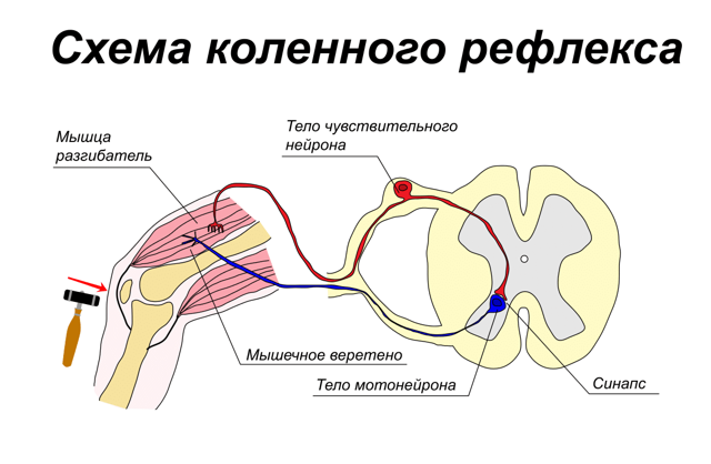 Поражение головного мозга: причины и симптомы нарушения