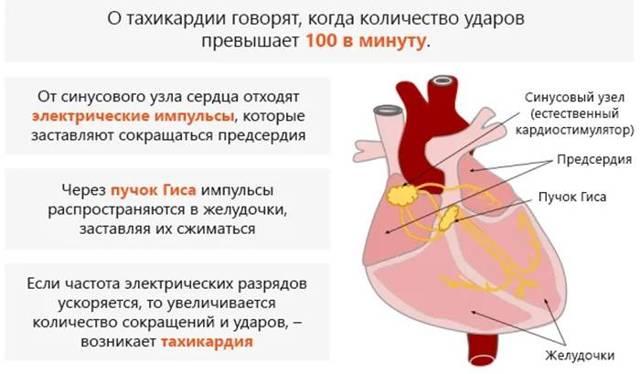 Нормальные значения пульса у детей и взрослых