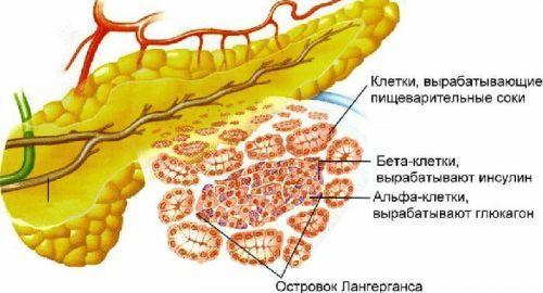 Препараты при панкреатите: какие лекарства принимают при панкреатите и как они действуют?