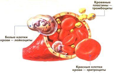 Норма тромбоцитов в анализе крови у женщин и беременных, причины отклонений