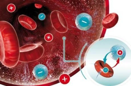 Как пишется и обозначается группа крови: резус-фактор, таблица, совместимость