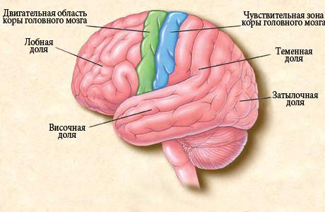 Причины возникновения эпилепсии у детей, симптомы и первые признаки приступов