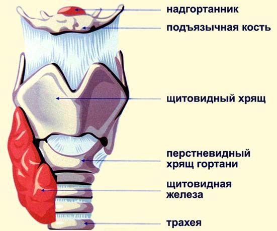 Стадии стеноза гортани у взрослых