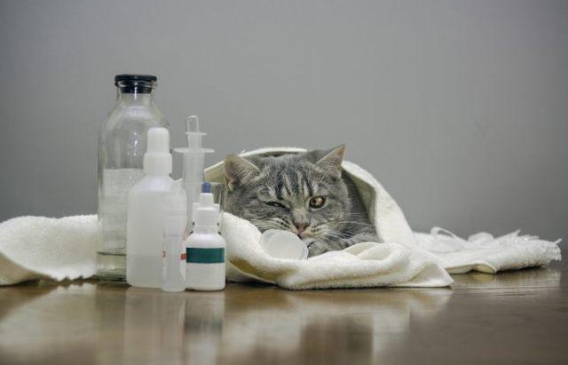Корм, питание и диета для кошек и котов при панкреатите, чем кормить?