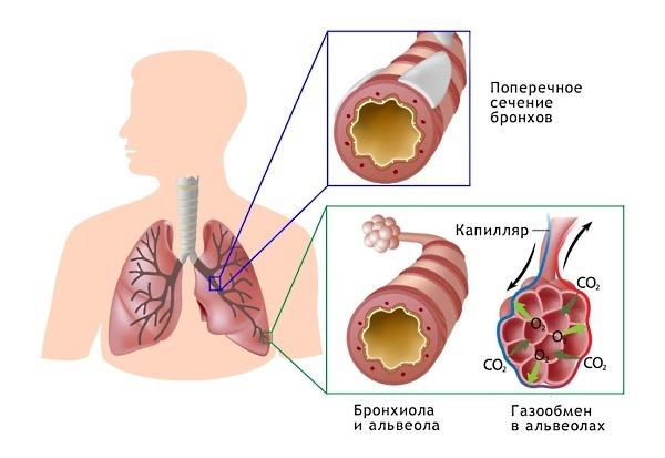Куда ставить горчичники при высоком давлении Можно ли ставить на шею и затылок при гипертонии