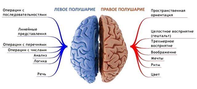 Центральный, левосторонний и правосторонний гемипарез (нарушение двигательной функции)