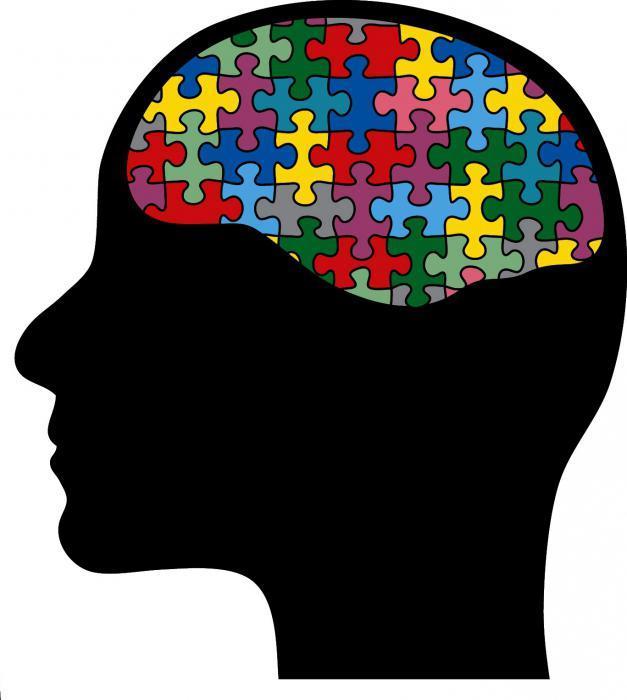 Головной мозг человека: строение, отделы, особенности функционирования