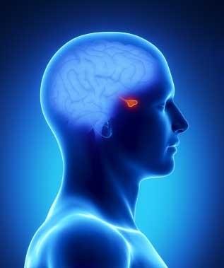 Аденома гипофиза: лечение народными средствами без применения химических препаратов