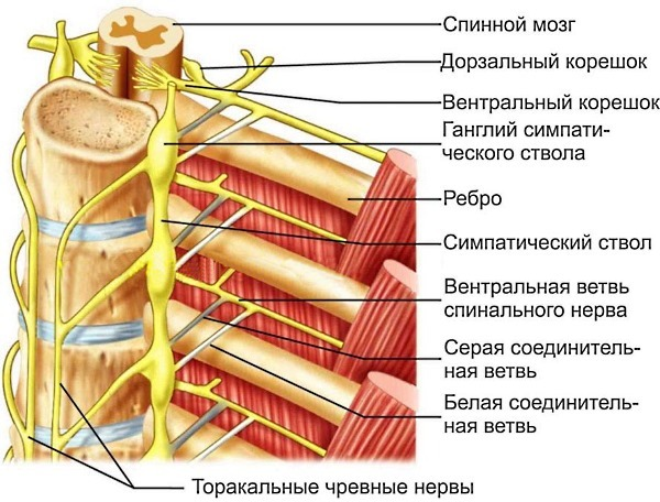 Межреберная невралгия справа: причины, признаки, симптомы, лечение