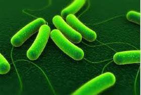 Зеленый кал у взрослого человека: причина появления стула темно-зеленого цвета, лечение