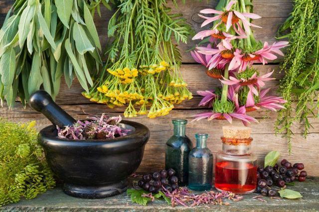Рецепты для лечения аллергии травами - народные средства от аллергии