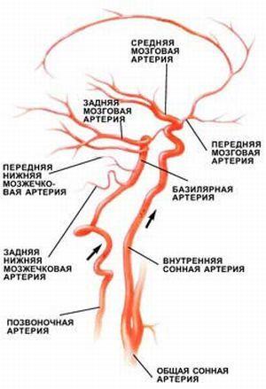 Классификация, симптомы и лечение сосудистых заболеваний головного мозга и ЦНС