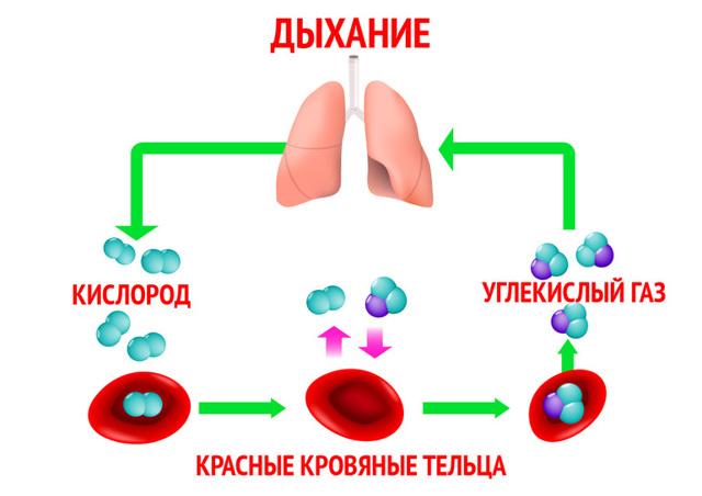 Сатурация или уровень кислорода в крови: норма у взрослых