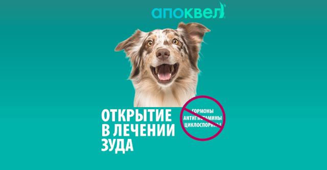 Апоквел для собак — инструкция по применению таблеток