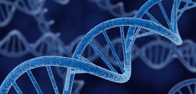 Средство от вегето-сосудистой дистонии: препараты от ВСД по гипертоническому и гипотоническому типу