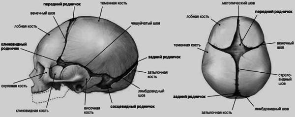 Метопический шов: описание с фото, причины проявления, симптомы, диагностика и рекомендации врачей