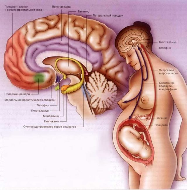 Симптомы опухоли гипофиза: лечение, причины, признаки рака мозга
