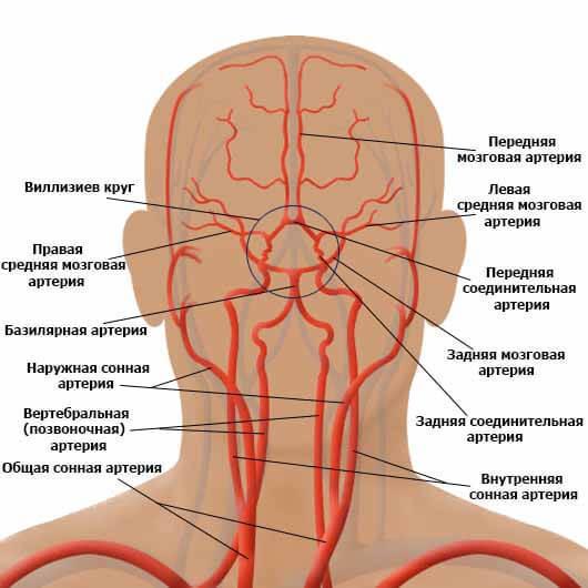 Церебральный атеросклероз сосудов, симптомы, лечение и последствия заболеваний