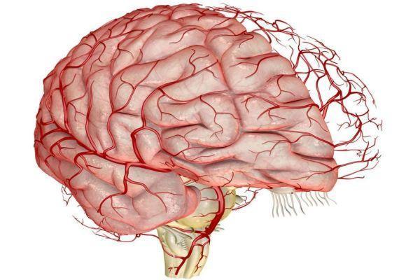 Как укрепить сосуды головного мозга Народными средствами и лекарственными препаратами?