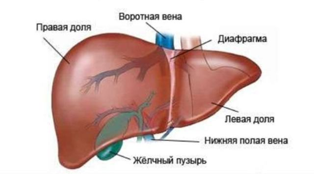 Лучевая диагностика окклюзии воротной вены