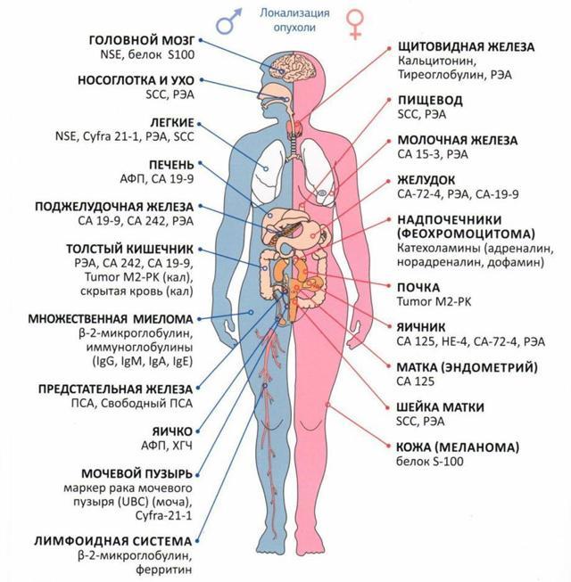 Онкомаркеры кишечника при раке: что сдавать, норма