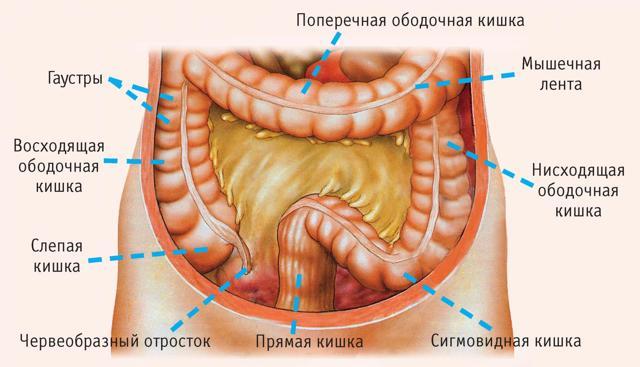 Заболевание кишечника: признаки, диета, и диагностика болезни