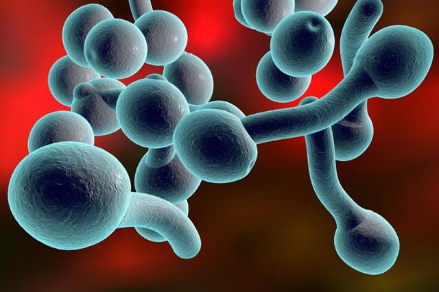 Грибок в организме человека: признаки и лечение