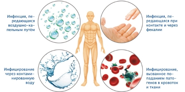 Хеликобактер пилори в желудке - что это, кто открыл, причины появления, способы заражения, как влияет на организм