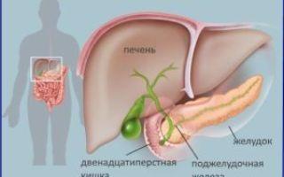 Двенадцатиперстная кишка: строение и функции органа