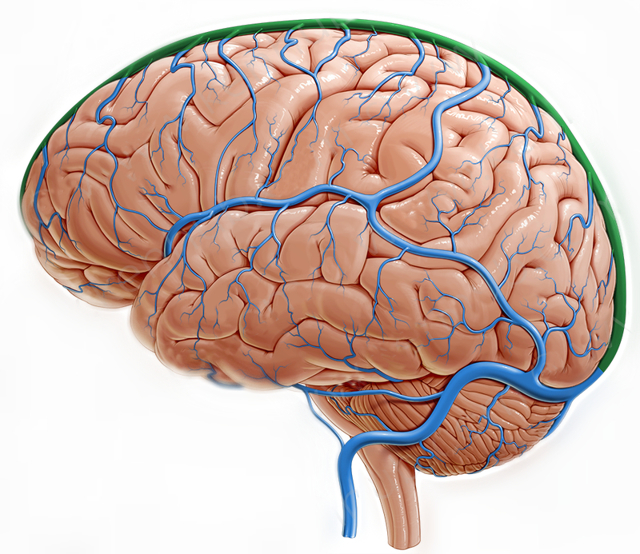 Венозная дисциркуляция головного мозга в ВББ: что это такое, признаки