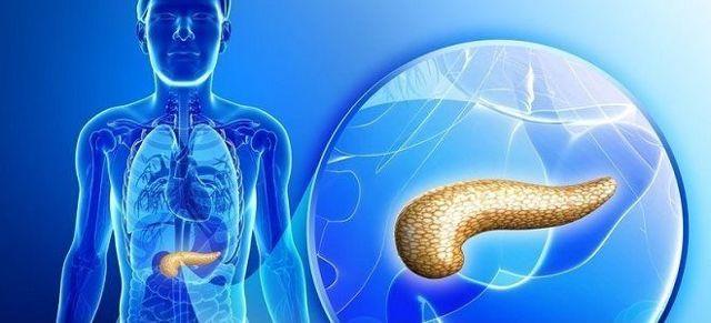 Размер поджелудочной железы у взрослого: норма у мужчин и у женщин - Сам себе доктор