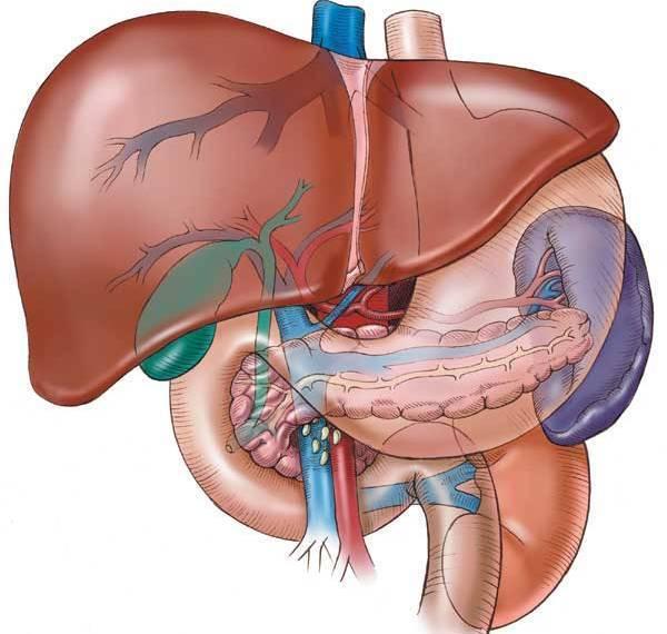 Сладж в желчном пузыре - что это такое, причины, симптомы и лечение