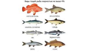 Какую рыбу можно при панкреатите: рекомендации врачей