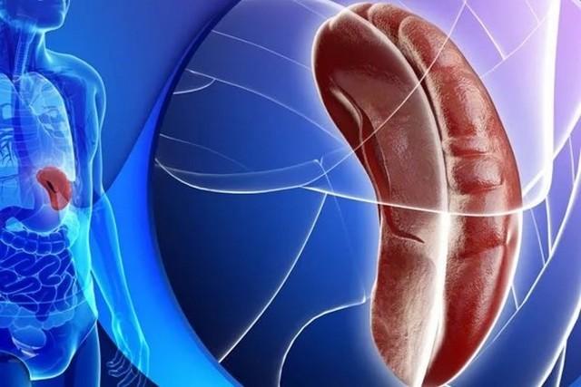 Признаки увеличения селезенки: причины и диагностика