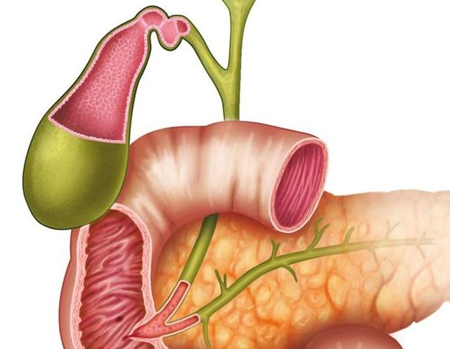 Цикорий при панкреатите и холецистите – положительные свойства и особенности использования. Можно ли пить цикорий при хроническом панкреатите