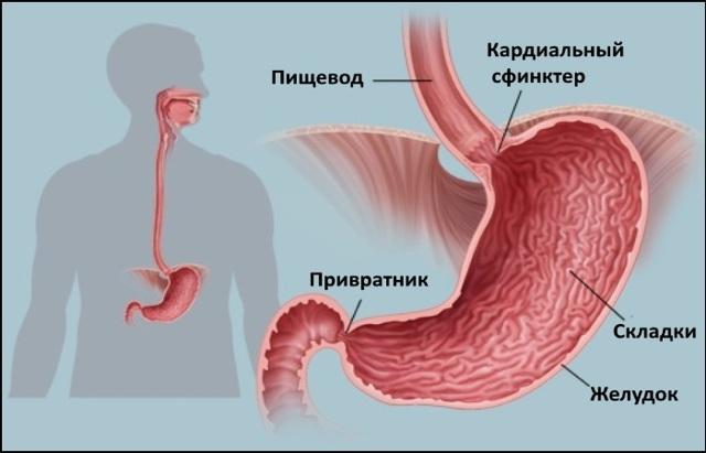 Что такое катаральный эзофагит (дистальный, поверхностный)